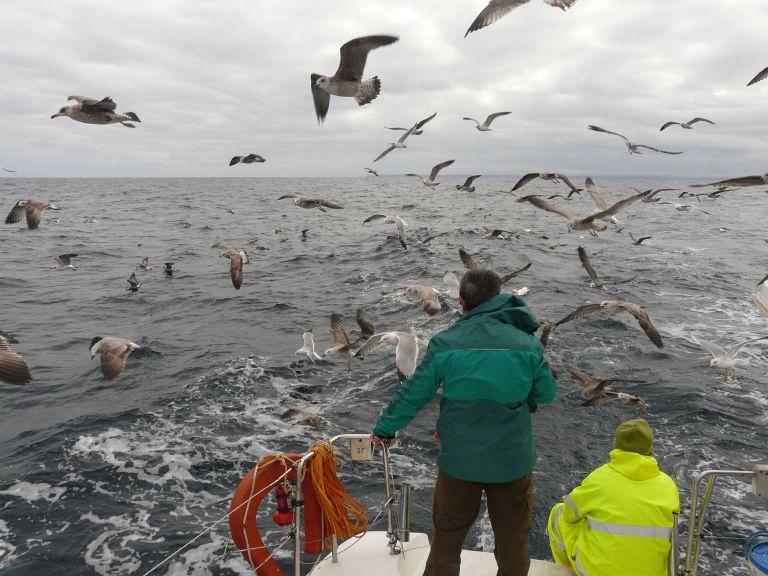 salida en barco a ver aves 13.11.16