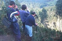 Vigilancia nido halcón en Corvera, 1999