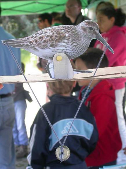 Manualidad de taller en el Día de las Aves Migratorias, 12.05.13