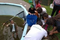 Rescate de anfibios en piscina de Callezuela, Illas, 14.06.19
